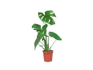 Zelené rastliny